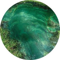 alga-trace-mineral-terbaik-di-dunia